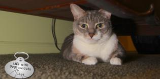 Haiku by Cat: Uninvited