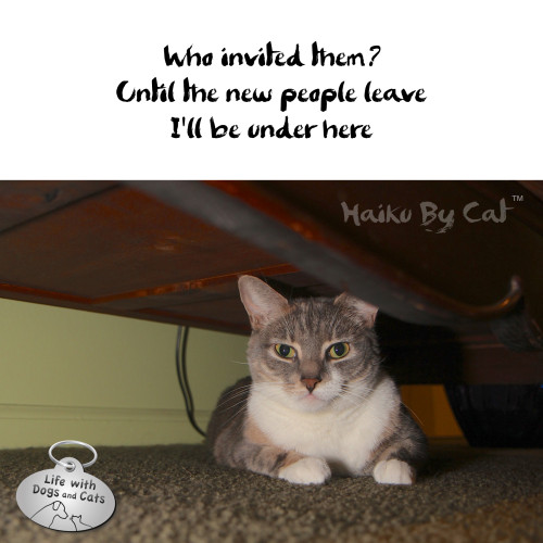 Haiku by Cat: Who invited them?  Until the new people leave I'll be under here