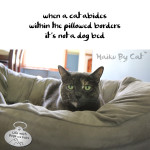 Haiku by Cat: Abide