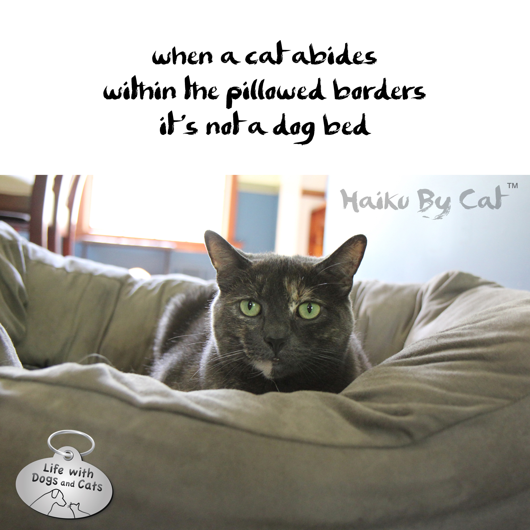haiku by cat abide life with dogs and cats