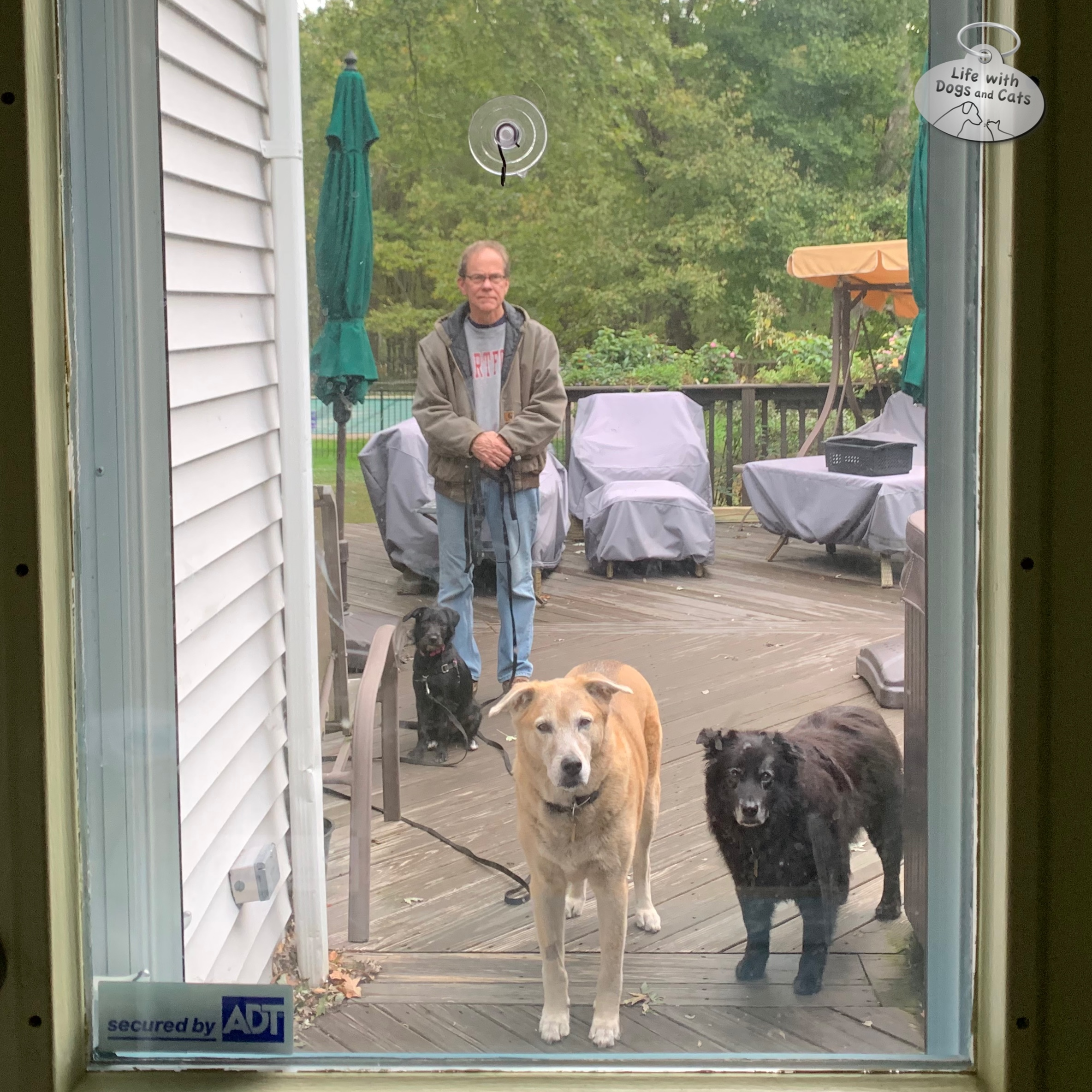 Halley, Jasper, Lilah—and Brian—waiting for me to bring the dogs' dinner outside on the deck.