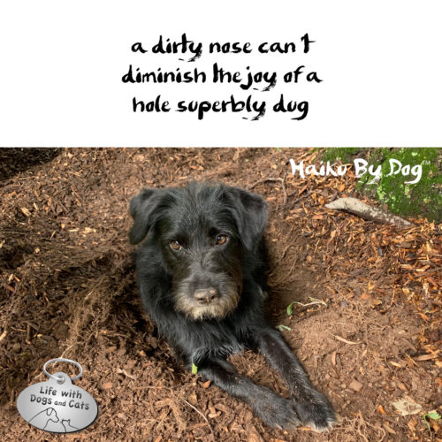 a dirty nose can't / diminish the joy of a / hole superbly dug