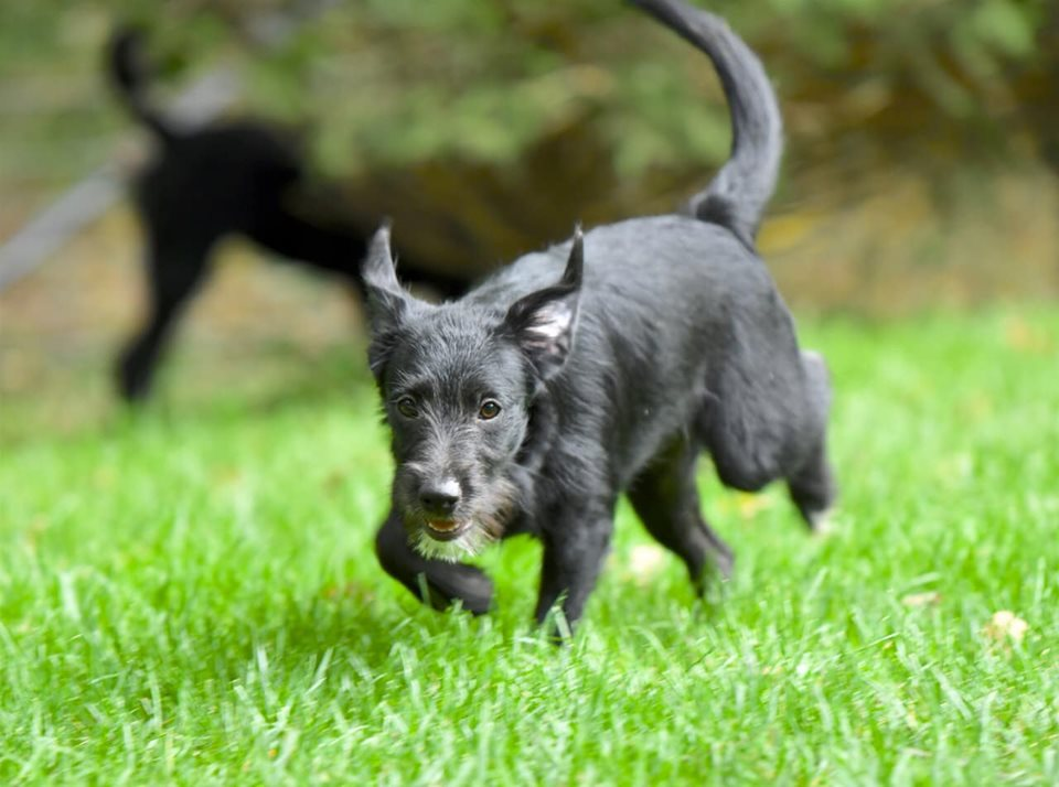 """Lynda"" running in her foster family's yard. ©Joseph Frazz photography"