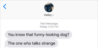 Text from Dog: Funny looking