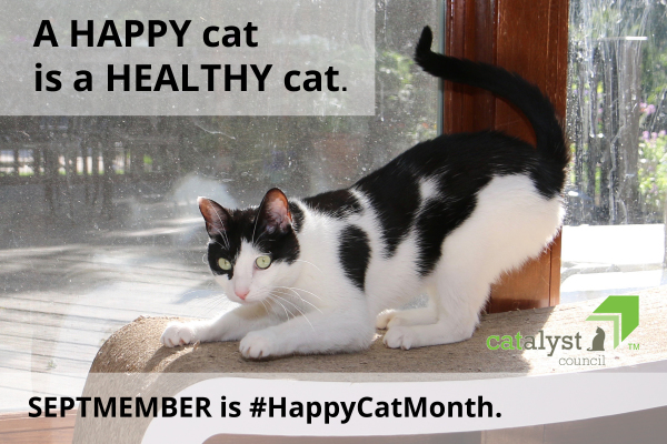 Happy Cat Month