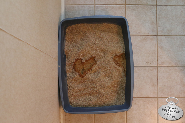 Every cat loves a clean litterbox. Though not every cat draws a heart to show it.