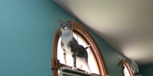Haiku by cat: Height