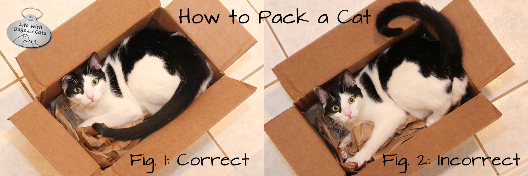 It's important to pack your cat correctly.