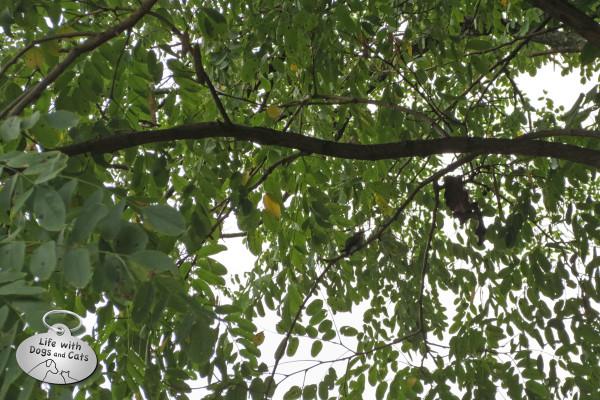 Hummingbird in the tree
