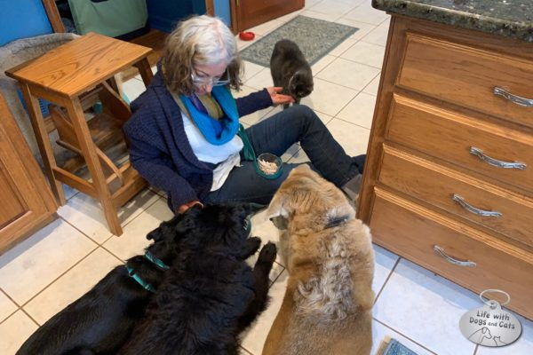 This is what training often looked like. Me on the floor with one or more cats on one side of my legs, and the dogs on the other side, while I rewarded good behavior with clicks and treats.