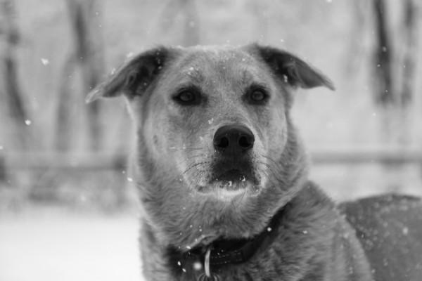 Jasper dog in the snow