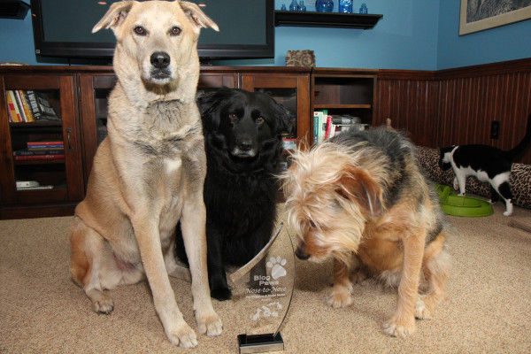 Three dogs pose with BlogPaws 2014 Nose to Nose Award