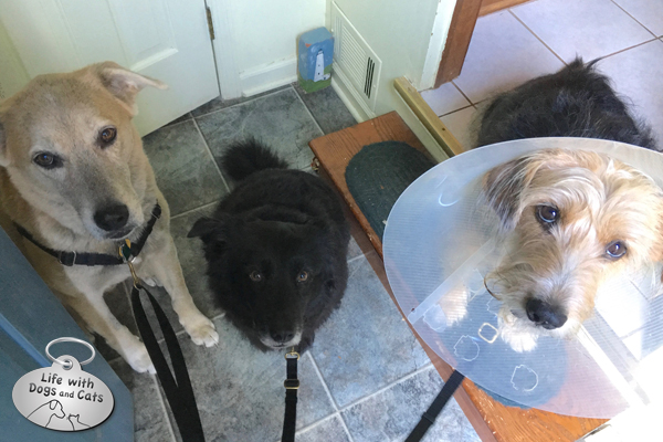 2 out of 3 dogs surveyed think the cone is funny.