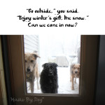 Haiku by Dog: Outside