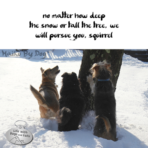 Haiku by Dog: no matter how deep / the snow or tall the tree, we / will pursue you, squirrel