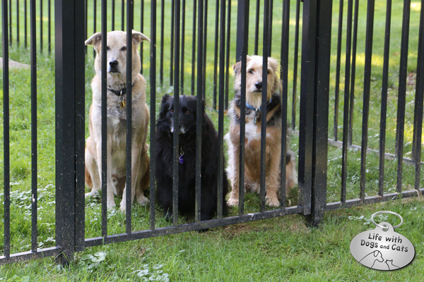 Jasper, Lilah, and Tucker: dogs behind bars.