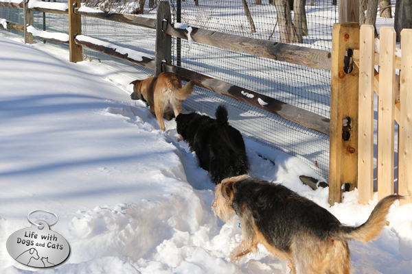 Jasper leads the way, creating a trail for Lilah and Tucker to follow.