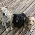 Jasper, LIlah and Tucker smile for the camera