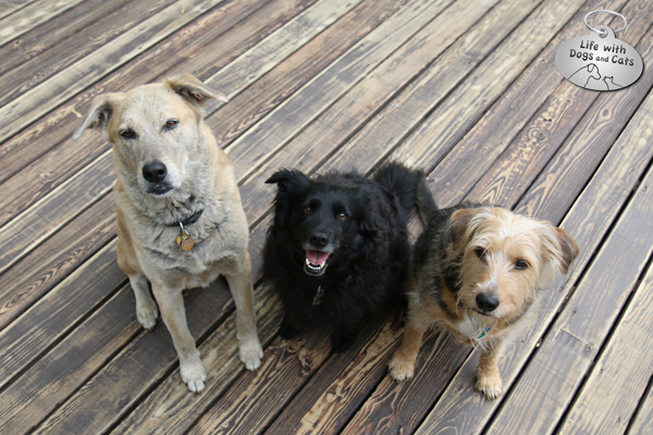 Jasper, LIlah and Tucker smile for the camera