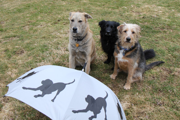 Three dogs pose by umbrella