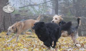 Photo: Three dogs running through fall leaves