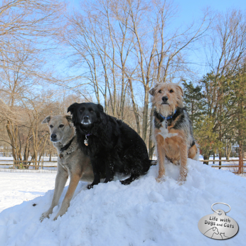 Tucker Lilah and Jasper sit on top of a snow pile this past February
