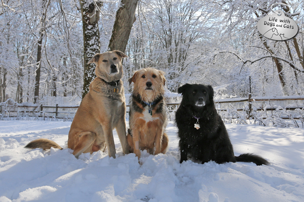 Jasper, Tucker and Lilah in the snow