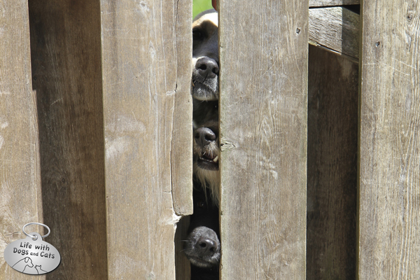 There's not much cuter than 3 dog noses.