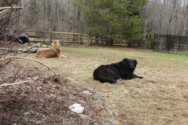 Jasper and Lilah relax in the back yard.