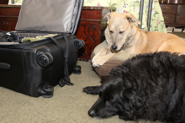 Two dogs looking sad by suitcase