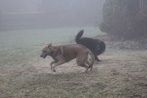 Jasper invites Lilah to a game of Chase, bowing and running.