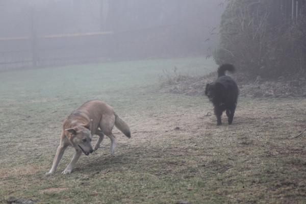 Jasper Lilah fog 2
