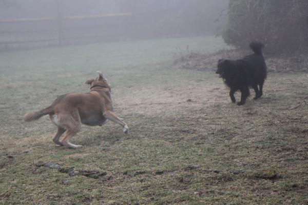 Jasper Lilah fog 4