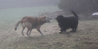 Story: Foggy Doggies
