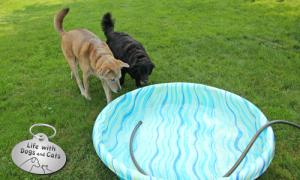 Haiku by Dog: Summer
