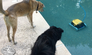 What My Dogs Would Do If Our Home Was Invaded By Robots