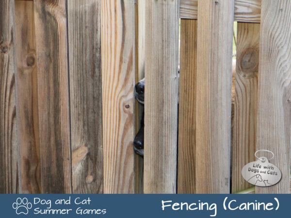 Dog and Cat Summer Games: Fencing