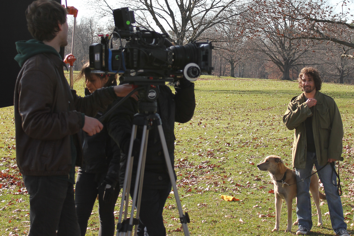Dog actor on the scene