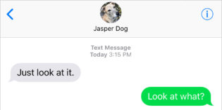 Text from Dog: Shadow of himself