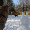 Jasper and Snow Dog watch Lilah