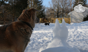Snow Dog Lives