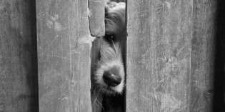 Photo: Dog noses times three