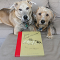 My own rough (Tucker) and smooth (Jasper) dogs pose with the new edition of Lucy Dawson's Dogs Rough and Smooth.