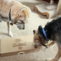 Jasper and Tucker smell the treats in the box
