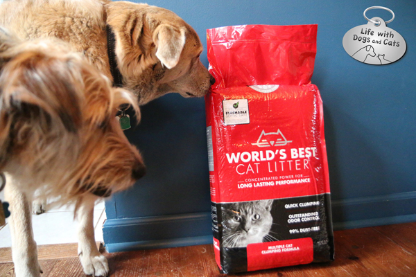 I discourage my dogs from eating cat litter, but if they happen to ingest a little, I don't worry.