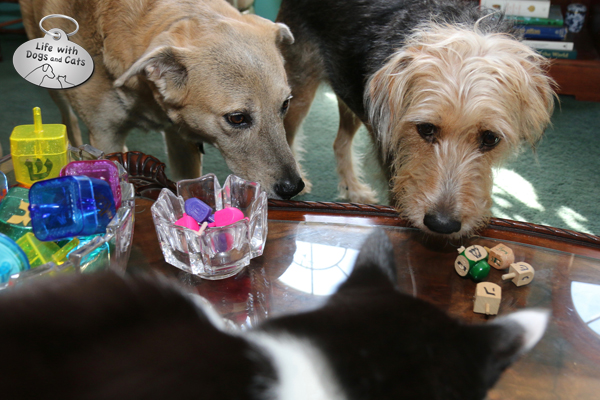 Tucker takes the dreidel game a little too seriously.