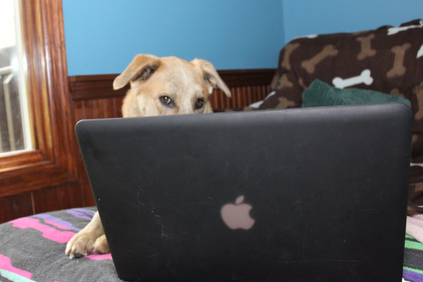 Dog checking friends and family photos on Facebook.