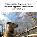 Haiku by Dog: bird, squirrel, chipmunk, mouse / none shall approach these borders / unremarked upon