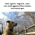 Haiku by Dog: Borders