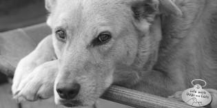 Photo: Jasper is a soulful dog